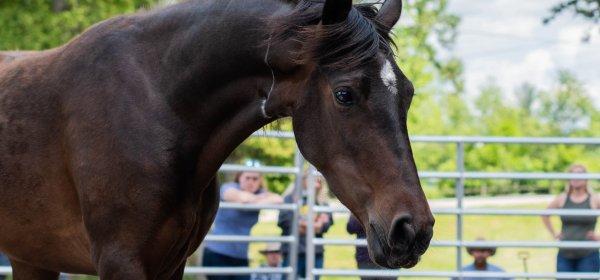 T  Creamer – Adopt a Horse